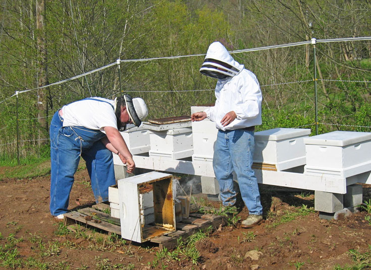 Beekeeping on Beeappy Farm